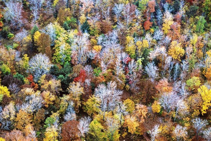 A tapestry of fall colors in Pennsylvania