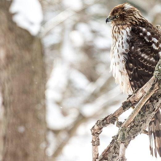 Meet the Backyard Birds With a Bad Reputation