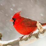 15 of the Snowiest Bird Photos Ever!
