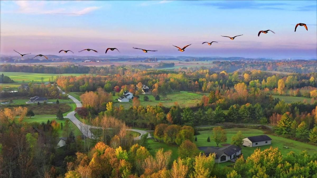 Aerial view of fall colors in Wisconsin with geese flying over farmland