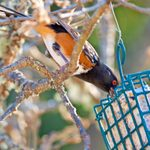 The 6 Best Feeding Tips for Autumn Birds