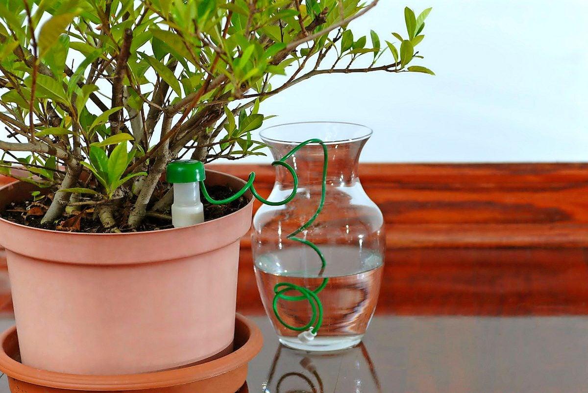 HydroSpike plant waterer