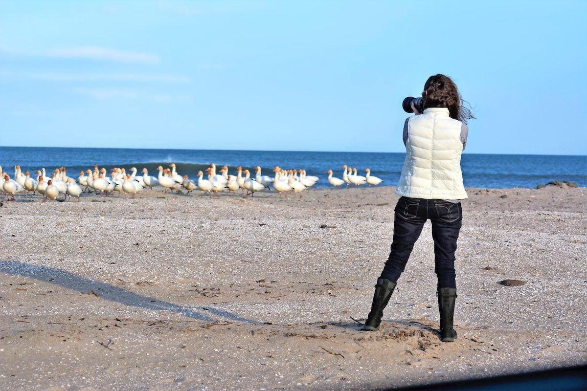 winter birding hotspots Delaware