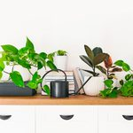 How to Get Rid of Indoor Plant Bugs