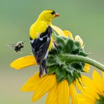 Create the Ultimate Backyard Wildlife Habitat