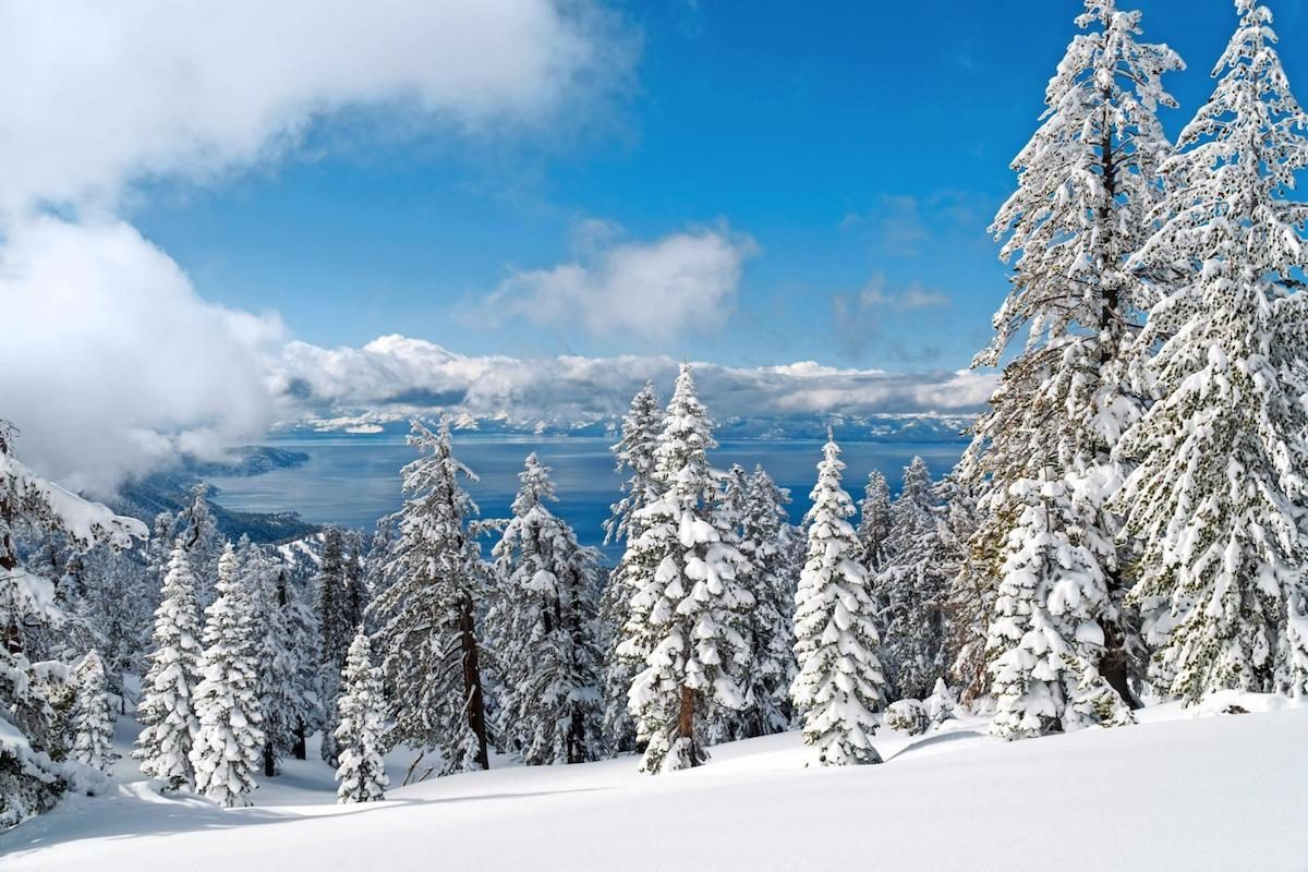 A view of snowy pine trees on a mountain with Lake Tahoe in the background.