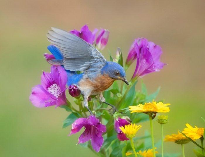 Young Bluebird In My Backyard
