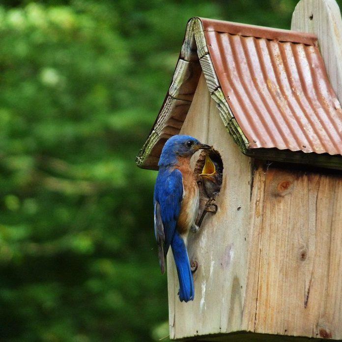 bluebird house placement
