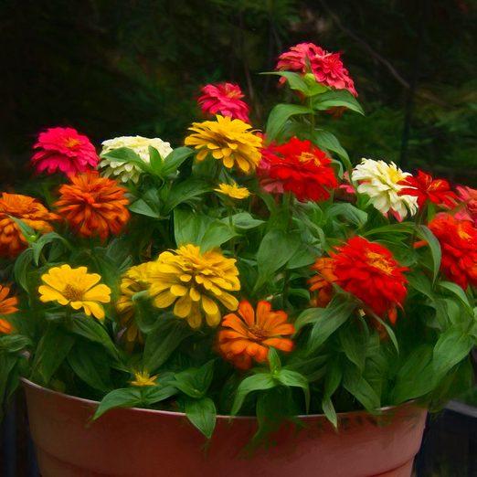5 Steps for Preparing a Garden for Spring