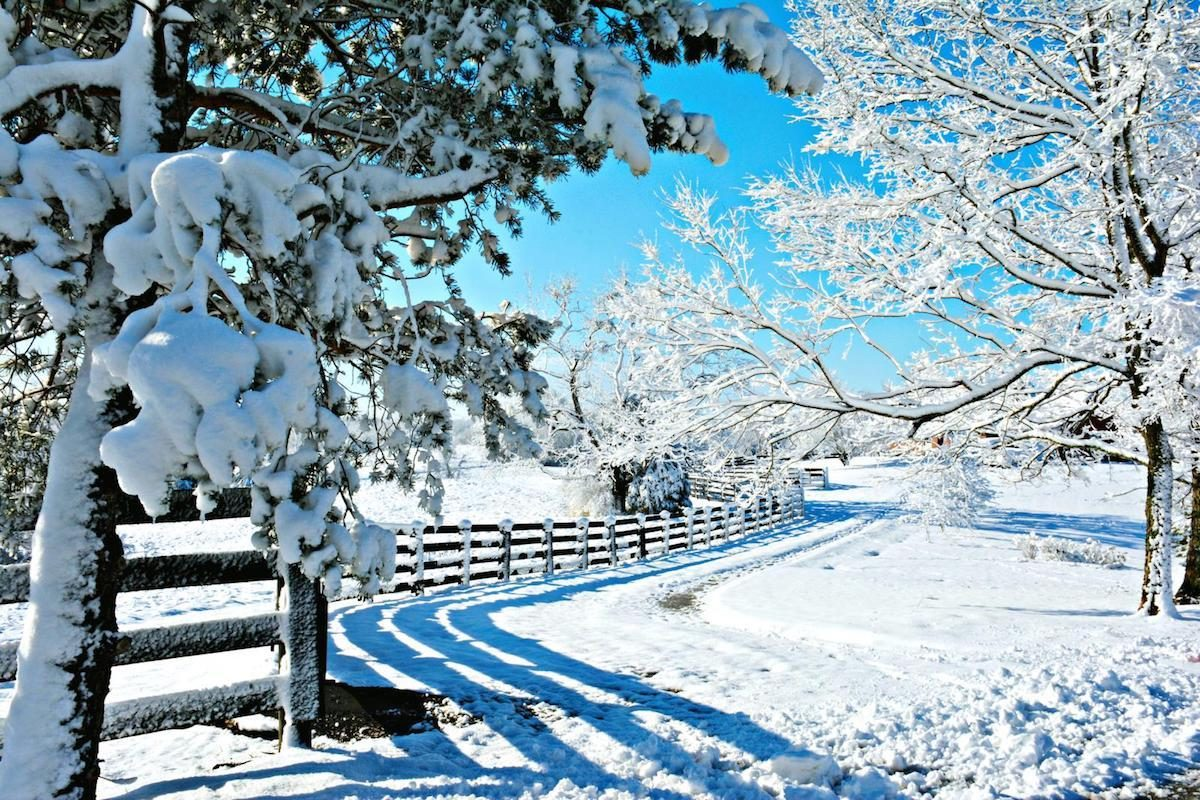 A snowy winter scene with trees and a fence.