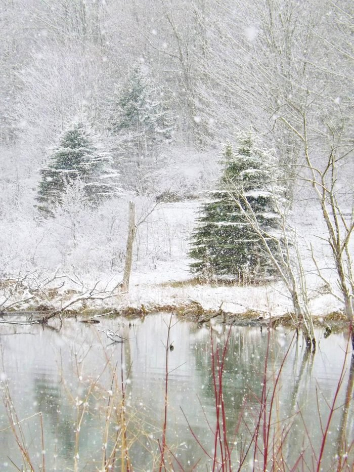 Snow falling on a pond with trees.
