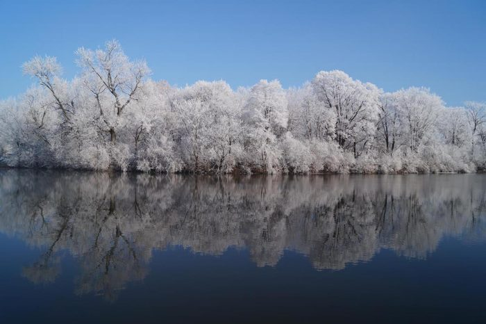 beautiful winter photos, A smooth lake reflecting a row of frosted trees on the opposite bank.