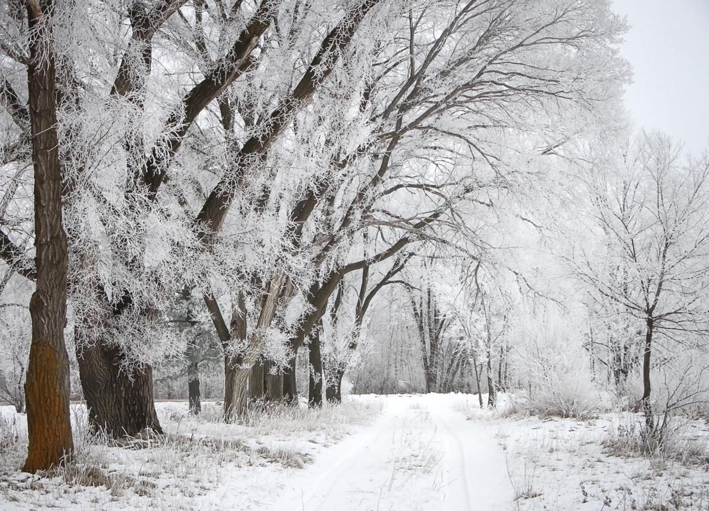 Snowy lane with frosted trees in winter