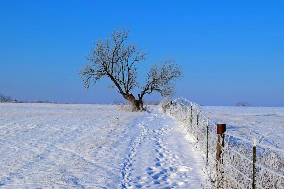 Winter scene with lone tree and fence in a snow-covered field.