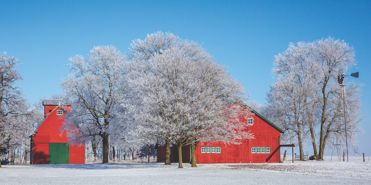 Beautiful red barns and icy trees and a field of snow.