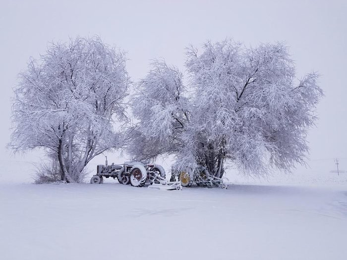 Two old tractors under the trees covered in a blanket of winter snow.