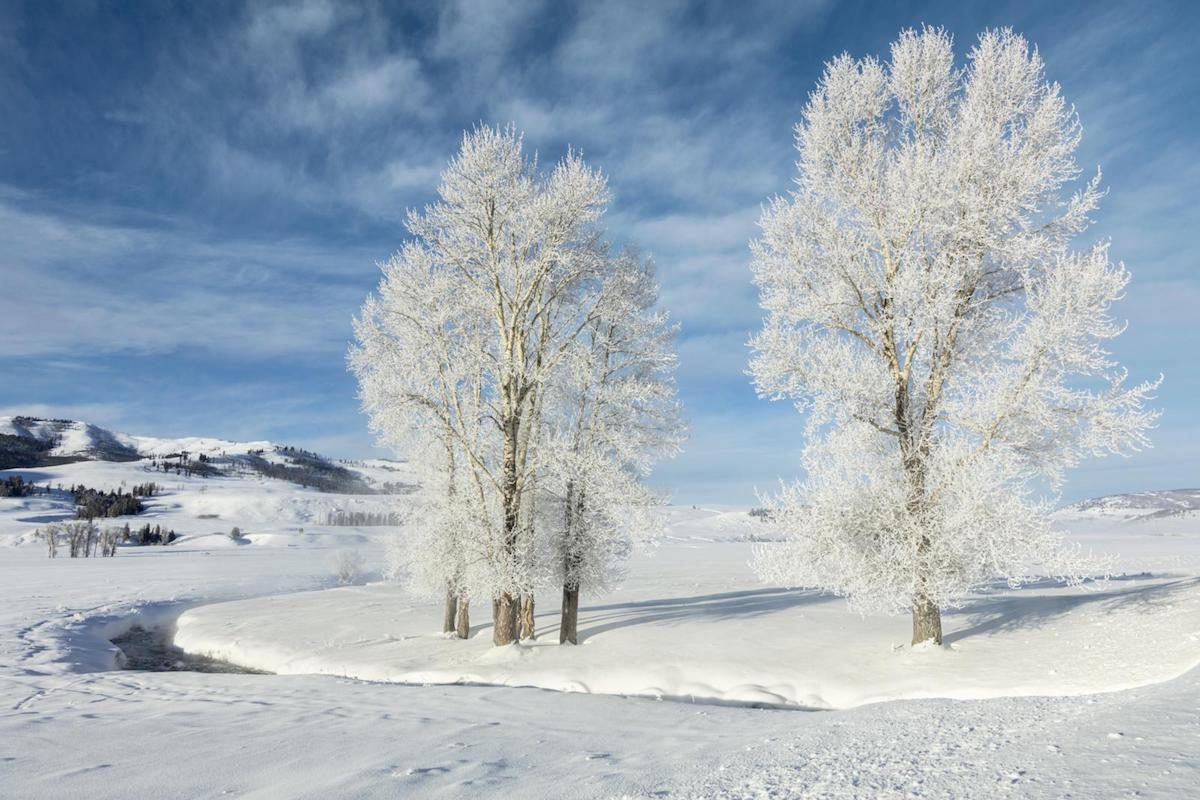 beautiful winter picture Frost-covered trees along the creek in the Lamar Valley of Yellowstone National Park.