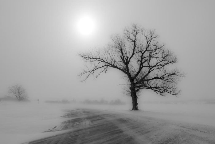 A lone tree by the road in the fog of a blizzard.