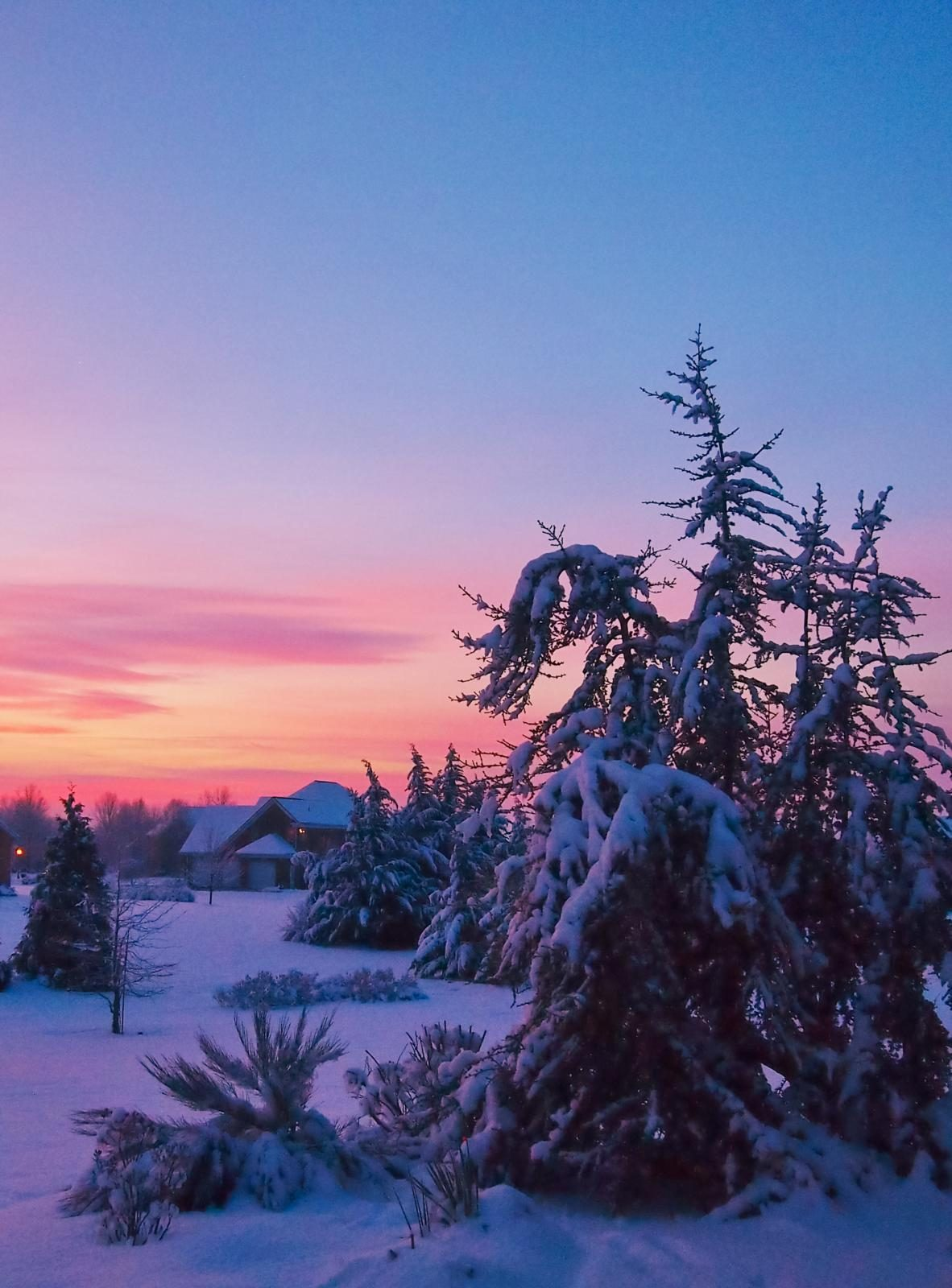 Dawn with snow-covered trees and a house.