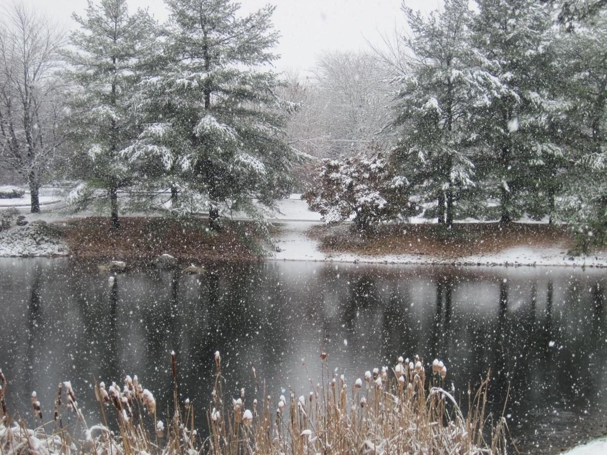 Winter pond with pine trees and snow falling.
