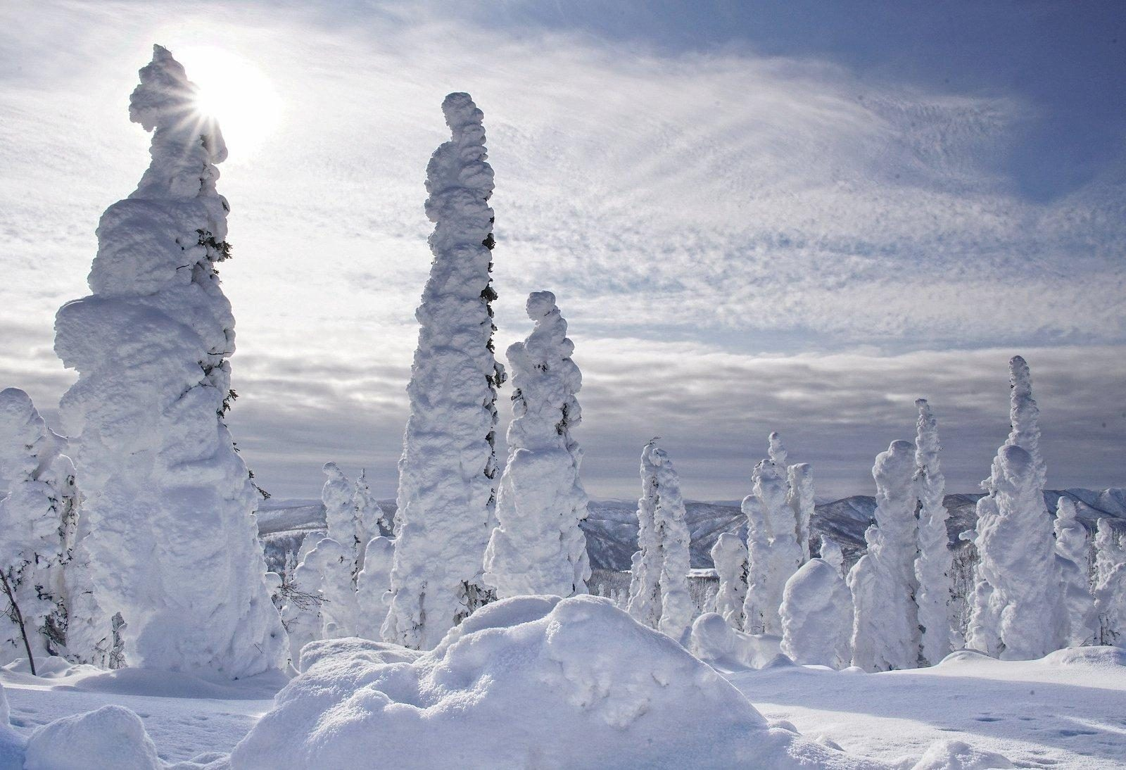 Snow-covered trees in Alaska