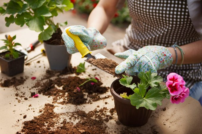 Close up shot of hands working with soil and flowers