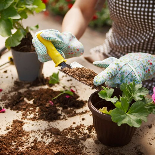 Can You Reuse Potting Soil in Containers?