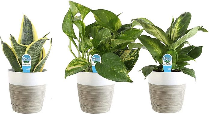 Amazon Costa Farms Send Plants