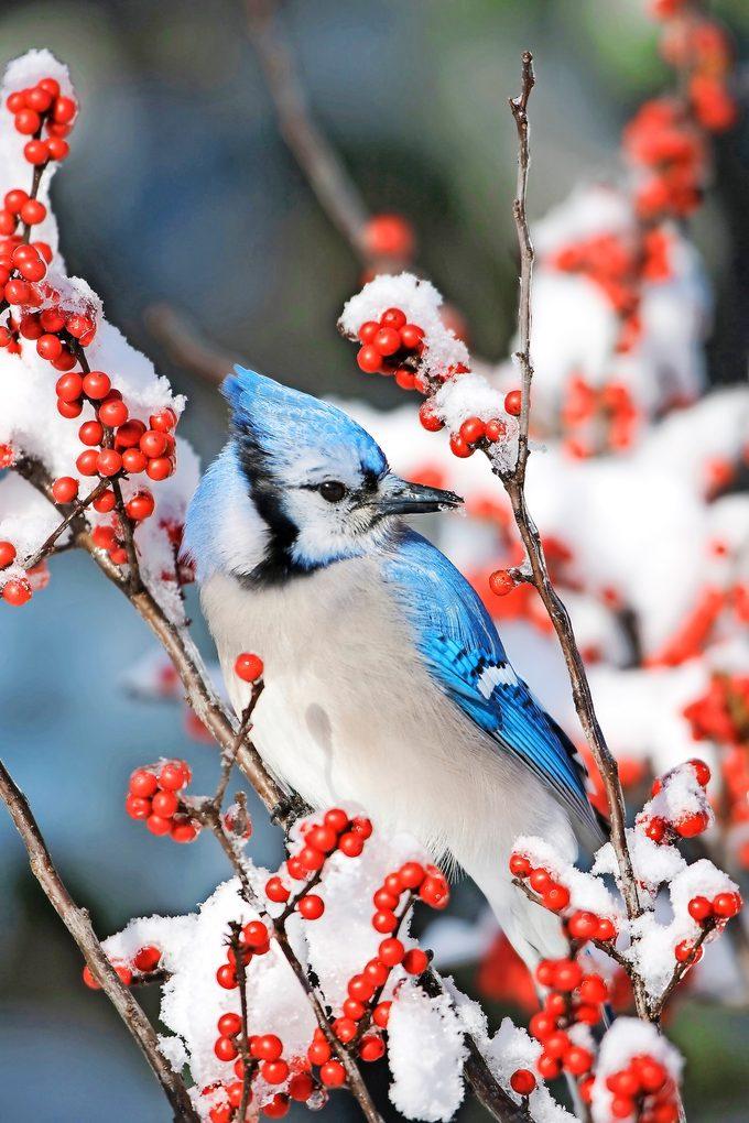 Shutterstock 1281489655 0001 berry bushes