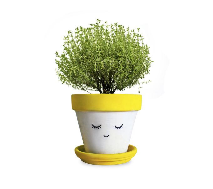 A small indoor pot plant grows in a handpainted smiling pot plant.