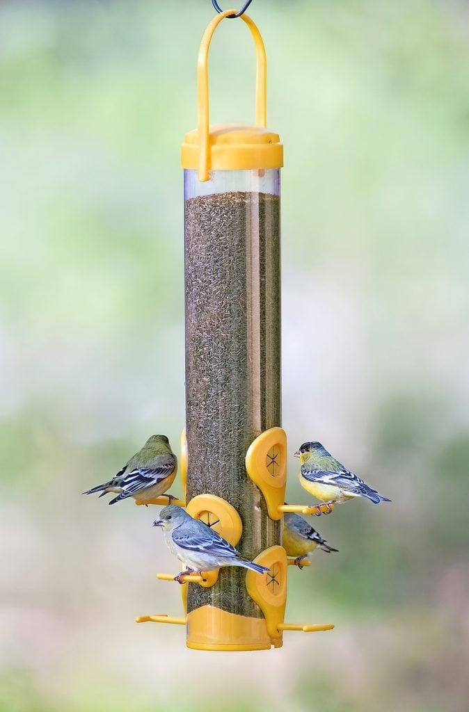 perky pet finch feeder