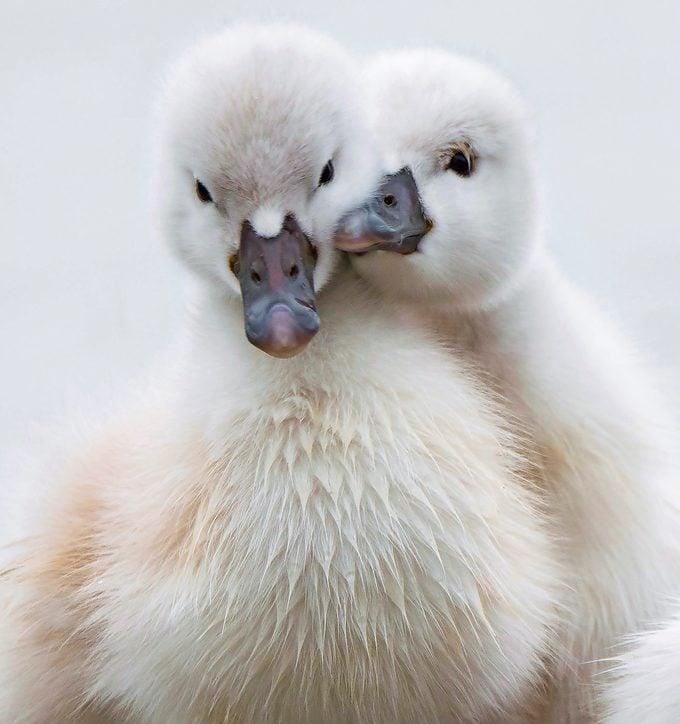 swans Marlon Porter Bnb Bypc2020.jpeg