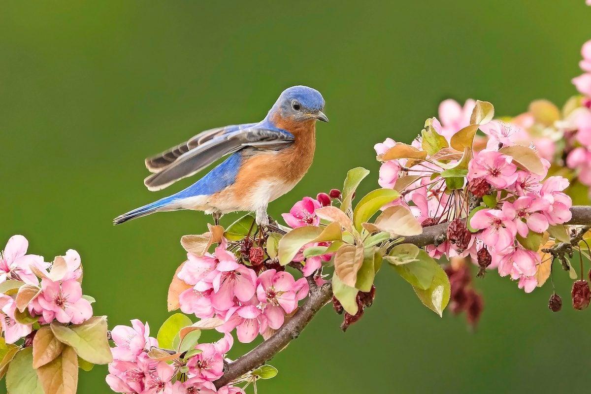 bluebird Roslynn Long Bnb Backyard Photo Contest V2