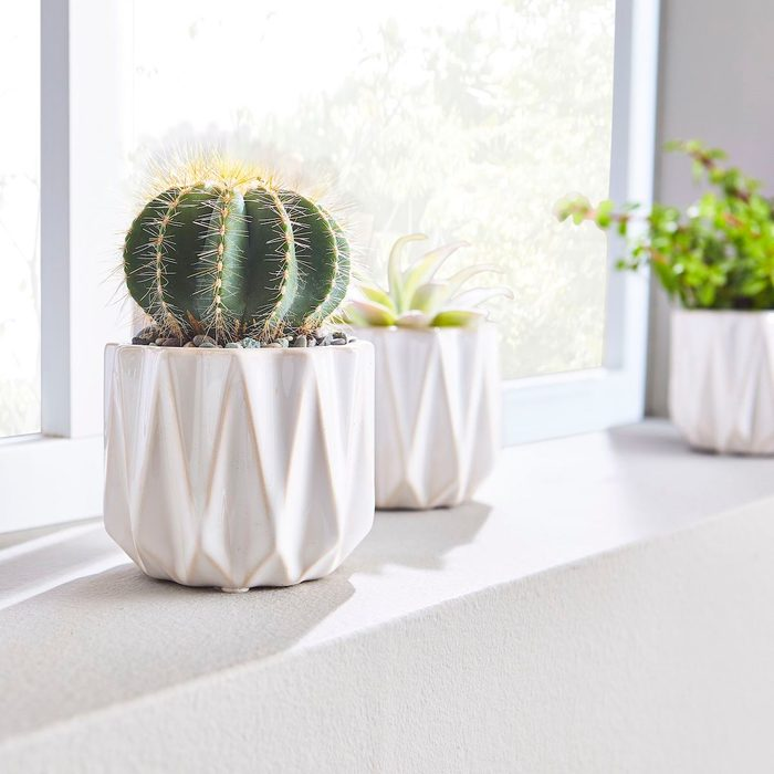 white succulent pots