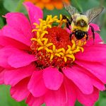 Tips for Gardening When You Have a Pollen Allergy