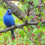 20 Photos of Breathtaking Blue Colored Birds
