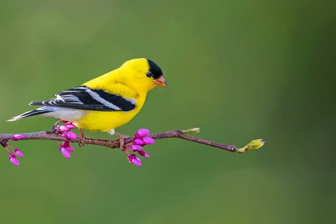 goldfinch Bnbugc Mike Timmons