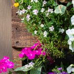How to Make a Vertical Pallet Garden