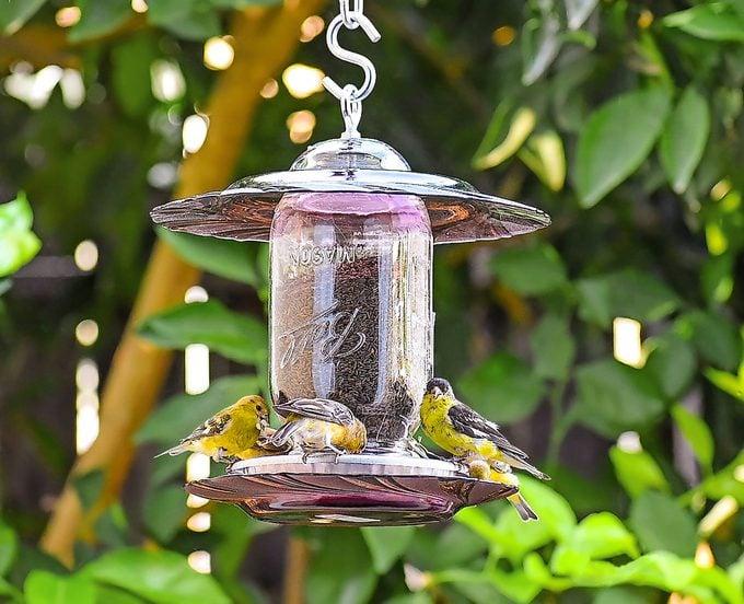 Finch feeder 193i Copy