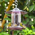 The Best Finch Feeders to Serve Thistle Seed