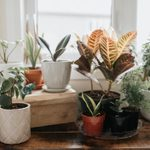 What You Need to Know Before You Buy Indoor Plants Online