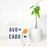 Expert Tips on How to Grow an Indoor Avocado Tree
