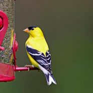 8 Ideas for Attracting and Feeding Birds in Spring