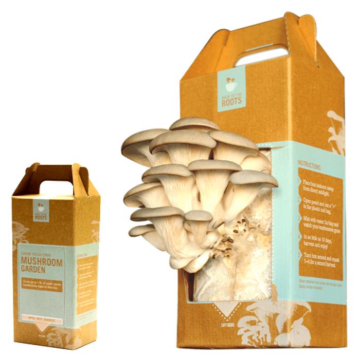Mushroom growing kit