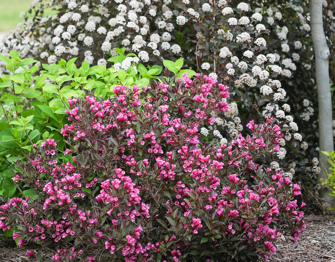 when to prune trees and shrubs