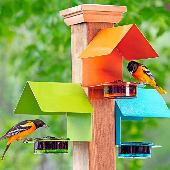 08 Bbxmay20 Mosaicbirds