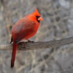The Most Commonly Sighted Bird in Every State