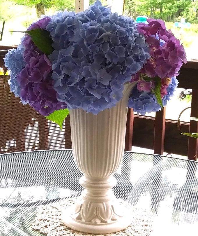 fresh cut hydrangeas in a vase