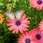 How to Grow a Pollinator Garden