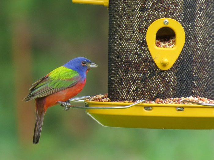 how to attract birds to feeders